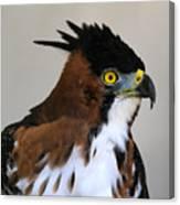 Ornate Hawk-eagle Canvas Print
