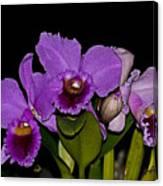 Orquid Canvas Print