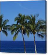 Palm Tree Tops Canvas Print