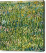 Patch Of Grass Canvas Print