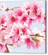 Peach Flowers Canvas Print