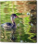 Pied-billed Grebe Bubbles Canvas Print