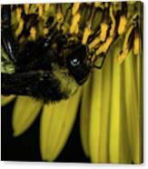 Pollen Collector 3 Canvas Print