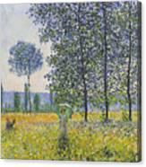 Poplars In The Sunlight Canvas Print