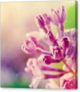 Purple Spring Lilac Flowers Blooming Close-up Canvas Print