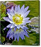 Purple Water Lily Pond Flower Wall Decor Canvas Print