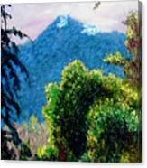 Rain Forrest Canvas Print