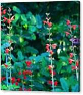 Red Salvias Canvas Print