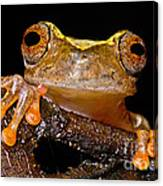Ross Allens Treefrog Canvas Print