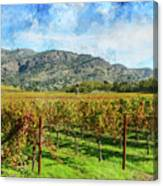 Rows Of Grapevines In Napa Valley Caliofnia Canvas Print