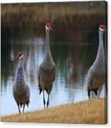 Sandhill Crane Family By Pond Canvas Print