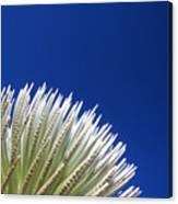 Silversword Plant Canvas Print
