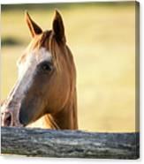 Single Horse Canvas Print