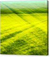 Skagit Valley Daffodils Canvas Print