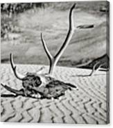 Skull And Antlers Canvas Print
