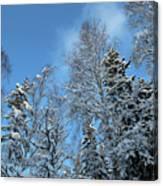 Snowy Trees Against A Blue Sky Canvas Print
