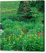 Stream And Alpine Flowers, Ouray Canvas Print