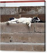 Street Dog Sleeping On Steps Canvas Print