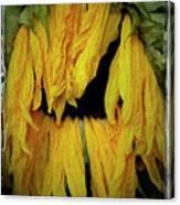 Sunflower 1134 Canvas Print