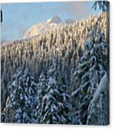 Sunlight Covered Trees In The Mountains Of British Columbia Canvas Print