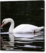 Swan Song Canvas Print