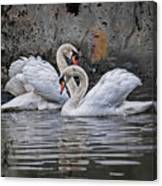 Tango Of The Swans Canvas Print