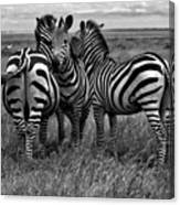 Tanzania Canvas Print