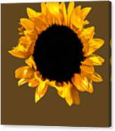 Sunflower Stretching On Brown Canvas Print
