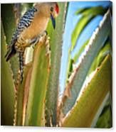The Gila Woodpecker Canvas Print