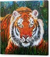 Tiger- Large Work Canvas Print