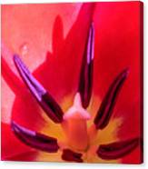 Tulip Porn Canvas Print