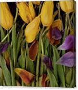 Tulips Wilting Canvas Print