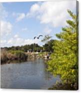 Turkey Creek In Palm Bay Florida Canvas Print