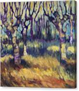 Van Gogh's Orchard Canvas Print