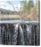 Vermont Swamp Canvas Print