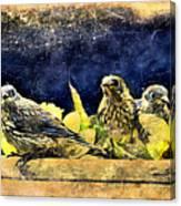 Vintage Bluebird Print Canvas Print