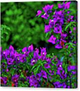 2- Visions Of Violet Canvas Print
