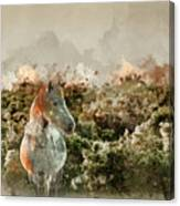 Watercolour Painting Of Beauttiful Close Up Of New Forest Pony H Canvas Print