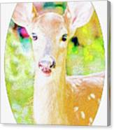 White-tailed Virginia Deer Fawn Canvas Print