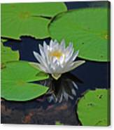 2- White Water Lily Canvas Print