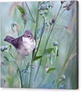 Wild Bird In A Natural Habitat Canvas Print