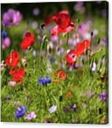 Wild Flowers And Red Poppies Canvas Print