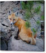Wild Fox Near Den In Wilderness Animals Canvas Print