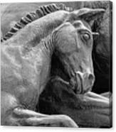 Wild Mustang Statue I V Canvas Print