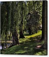 Willows And Oaks Canvas Print
