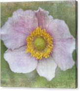 Windflower  Canvas Print