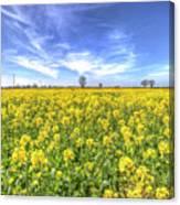 Yellow Fields Of Summer Canvas Print
