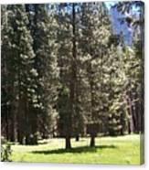 Yosemite Valley Floor Canvas Print