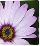 Closeup Of A Colourful Flower Canvas Print