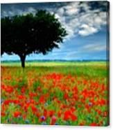 Landscape Illumination Canvas Print